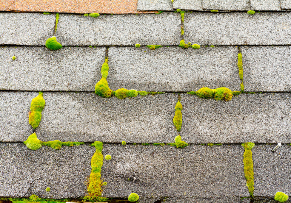 moss on house roof
